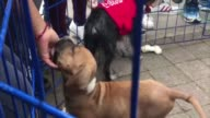 Volunteers hope to reunite rescued dogs and their owners after the earthquake and promote the adoption of shelter animals at a park in Mexico City on...
