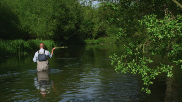 Wading fly fisherman casts fly onto river, Wiltshire, England
