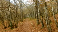 Walk along the path of the autumn woods