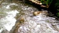 Walk in the stream