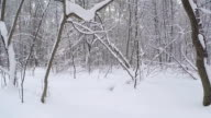 Walk in the winter forest. Forest after a snowfall.