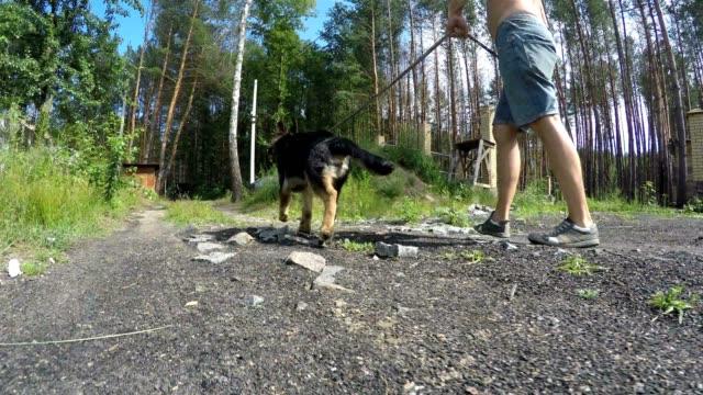 Zu Fuß mit einem Welpen ein Deutscher Schäferhund.