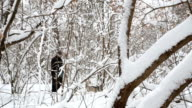 Walk with Siberian Husky in the winter forest.