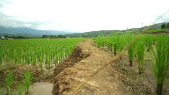 Grat der Reisterrassen entlang