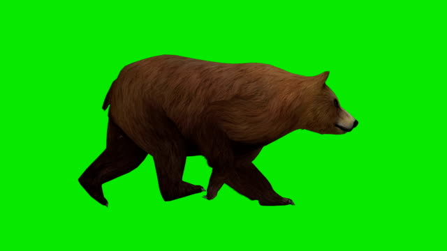 Walking Bear Green Screen (Loopable)