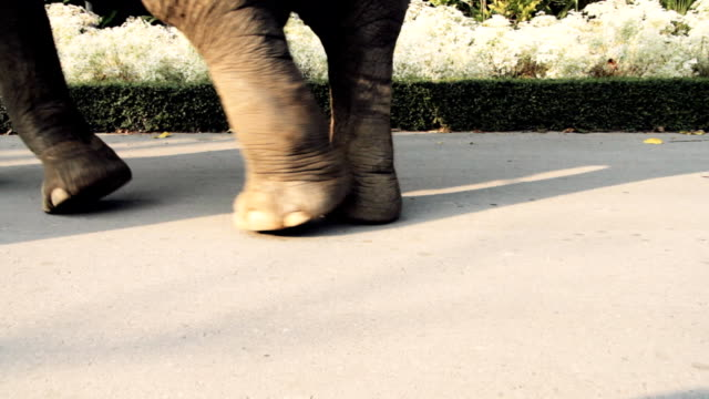 Elefanti a piedi