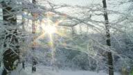 HD-ZEITLUPE: Zu Fuß In idyllischer Winter Forest