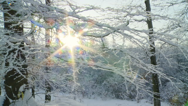 HD SLOW MOTION: Walking In Idyllic Winter Forest