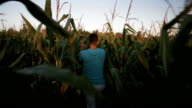 Walking in the Corn Field