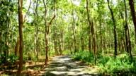 Zu Fuß im Wald, Steaducam Aufnahme