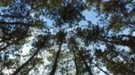 Walking im Wald