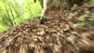 HD: Cammina nella foresta