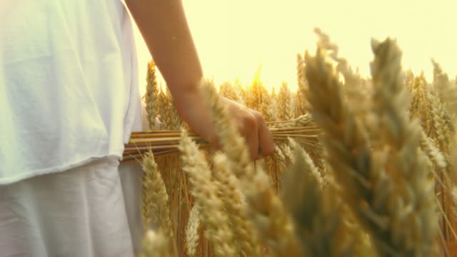 HD-ZEITLUPE: Fuß In Wheat Field