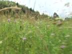 Walking On A Meadow