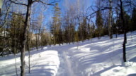 Walking on a Snow Covered Path 2