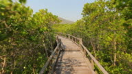 Walking over the line in mangrove forest