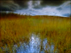 Walking point of view through tall grass + reed covered marsh toward hill / Denali National Park, Alaska