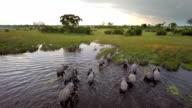 Fuß durch afrikanische Wasser