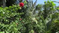 POV / Walking through a tropical garden