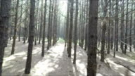 Fuß durch den Wald, Mpumalanga, Südafrika