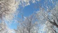 HD STEADYCAM:  Walking under trees