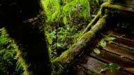 walking way in forest on rain seasons