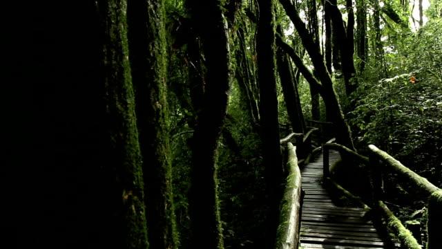 Fußgängerweg in cloud forest, dolly Schuss.