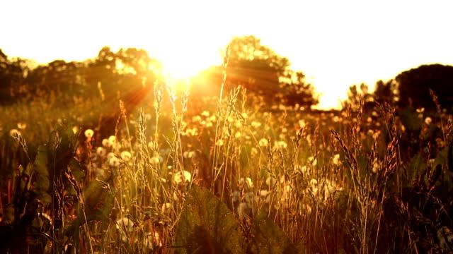 Warm Summer Pasture