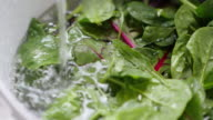 washes a colander of fresh salad leaves