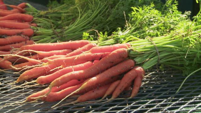 CU Washing freshly harvested carrots