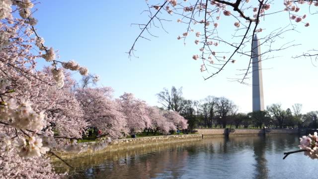 Washington Monument during the Cherry Blossom Festival