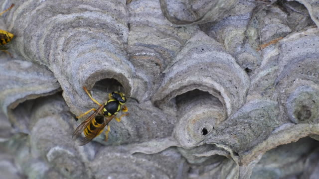 A Wasp builds a thin round wall