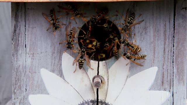 Wasp Nest Inside Bird Feeder