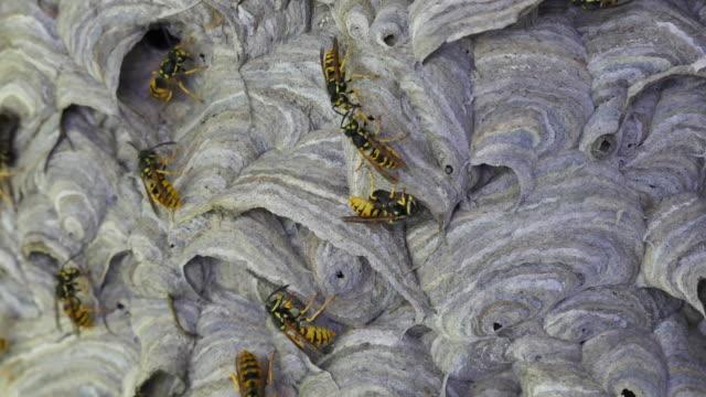 Wasps feeding each other