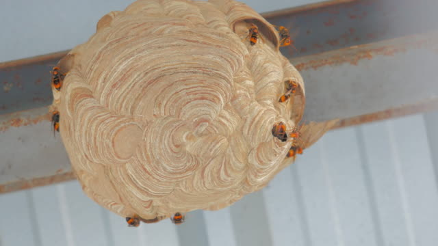 Wasp's nest, Bees on honeycomb