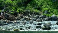 Watching bear in Shiretoko National Park