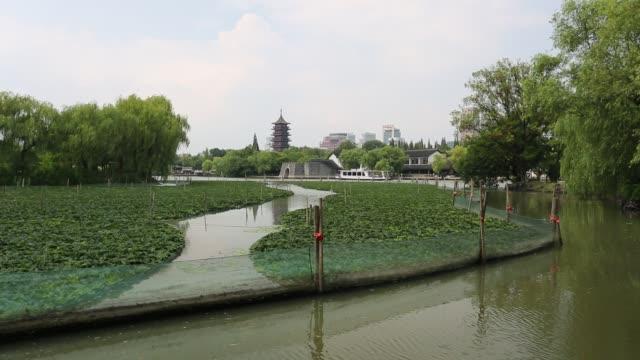 Water caltrop field on the South Lake,Jiaxing,Zhejiang,China