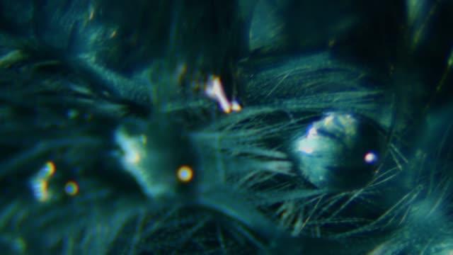Wassertropfen auf grüne Feder Makro ECU Aufnahme