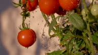 SLO MO Water Drops Splashing Agains Tomatoes