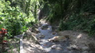 Water flows in a small stream in an Antigua National Park