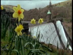 Water gushing down Elan Valley dam wall, daffodils in foreground, Wales