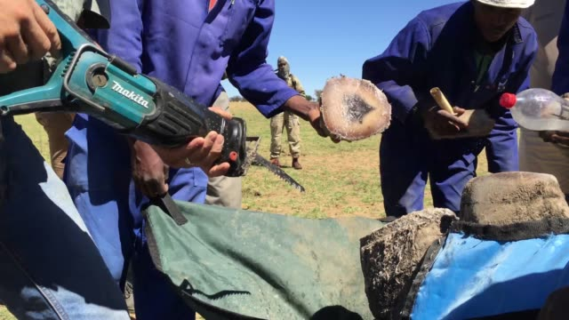 Water is sprayed onto the area as a rhino has it's horn trimmed at the ranch of rhino breeder John Hume on October 16 2017 in the North West Province...