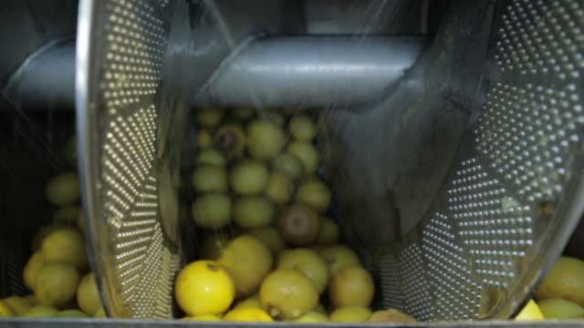 Water spraying on bergamot fruit fin machinery at factory