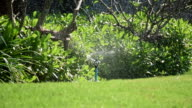 Water sprinkler watering in the garden