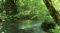 water stream and green forrest