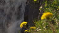 A waterfall spills over rocks and past blooming dandelions.