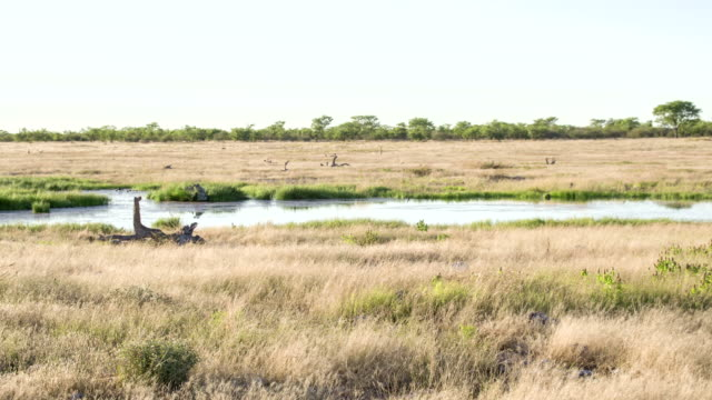 WS ZO Waterhole In The African Savannah