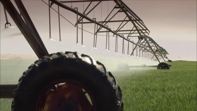 Watering grass in the desert