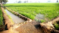 watering in the green wheat field during winter season