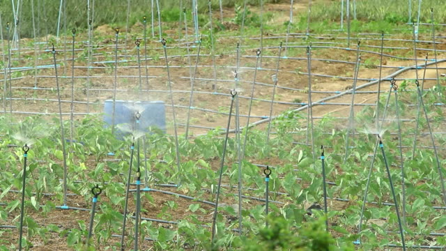 Watering sprinkler for Agriculture